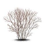 Bush mit Schatten ohne Blätter Lizenzfreies Stockbild