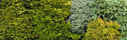 Bush Mix Background. Great mix of bush for a background Royalty Free Stock Image