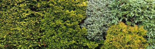 Bush Mixbakgrund Royaltyfri Bild