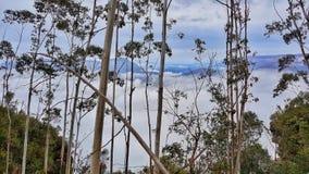 Bush, moln och avlägsna maxima, Katoomba, BlueMountains, Australien royaltyfri bild