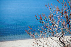 Bush na plaży blisko wody obrazy stock