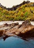 Bush nativo na praia de Nova Zelândia na costa oeste fotografia de stock