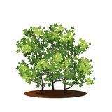 Bush with green leaves and shadow Stock Photos