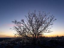 Bush no por do sol no inverno foto de stock