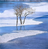 Bush no rio congelado Fotos de Stock