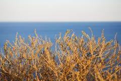 Bush och havet Arkivbild