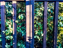 Bush och staket Arkivbild