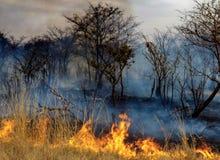Bush ogień Zdjęcia Stock