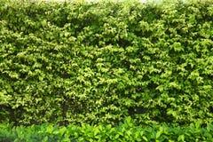 Bush ogrodzenie zdjęcie stock
