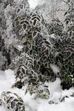 Bush omvat met rijp tegen de achtergrond van boomboomstammen in de strenge vorst van een vakantiepark in de winter Stock Foto