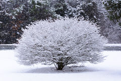 Bush omvat in sneeuw met sneeuwvlokken het vallen Stock Foto