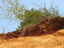 Bush On A Clay Hill Royalty Free Stock Images