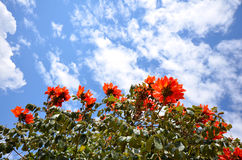 Bush with orange flowers against blue sky Stock Photo