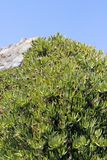 Bush på bakgrunden av vaggar och himmel Arkivfoton