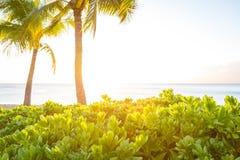 Bush på en strand på Maui, Hawaii Arkivbild