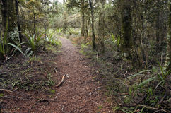 Bush pathway in a rain forest in tongariro National Park Royalty Free Stock Images