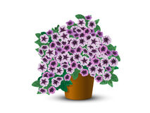 Bush petunias in a pot Royalty Free Stock Images