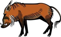 Bush Pig. Illustration of a bush pig stock illustration