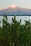 Bush of the pine in front of the lake and snowcapped Mount of Ar Royalty Free Stock Image