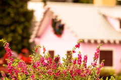 Bush of pink flowers in garden Stock Images