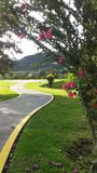 Bush with pink flowers next to a road to the mountains. stock photos