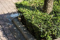 Bush Plant Stock Images