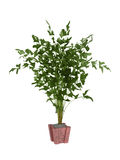 Bush plant Royalty Free Stock Photography