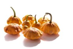 Bush pumpkins Stock Photo