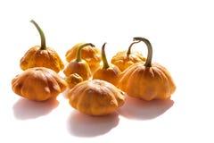 Bush pumpkins Stock Photo