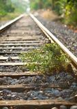 Bush at railroad Stock Photo
