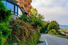 A bush with red berries growing along the romantic hotel in Italy. City Arona. Past the front door, paving the road.focus on the r. A bush with red berries royalty free stock photography