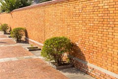Bush and the red brick wall, Lumbini, Nepal Royalty Free Stock Photo