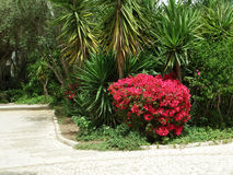 Bush with red flowers. On a background of palm trees Stock Images