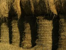 Hay bales. Round hay bales on the farm Royalty Free Stock Image