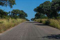Bush road Stock Image