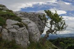 Bush s'accroche à la montagne Images libres de droits