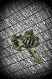 Bush-Salat auf einem abstrakten Hintergrund Lizenzfreies Stockbild