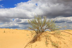 Bush in sand desert Stock Photo