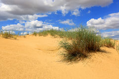 Bush in sands Royalty Free Stock Images