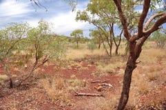 Bush Scenery Royalty Free Stock Photo
