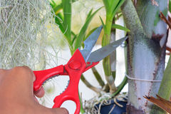 Bush scissors Royalty Free Stock Photo