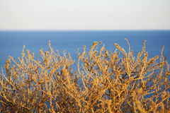 Bush and the Sea. A bush and sea background Stock Photography