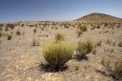 Bush in semi-desert Royalty Free Stock Images
