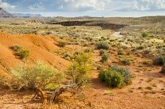 Bush in semi-desert Stock Image