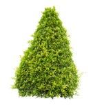 Bush or shrubs isolated Stock Image