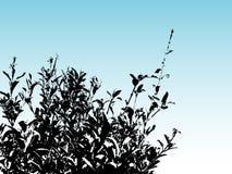 Bush silhouette. Silhoutte of a bush Royalty Free Stock Photos