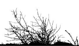 Bush/silhouette/vecteur Image libre de droits
