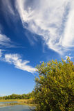 Bush and sky. Bush and beautiful clouds in blue sky royalty free stock image