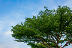 Bush and sky. With clear sky and green tree royalty free stock images