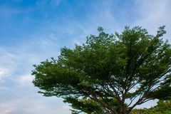 Bush and sky. With clear sky and green tree royalty free stock image